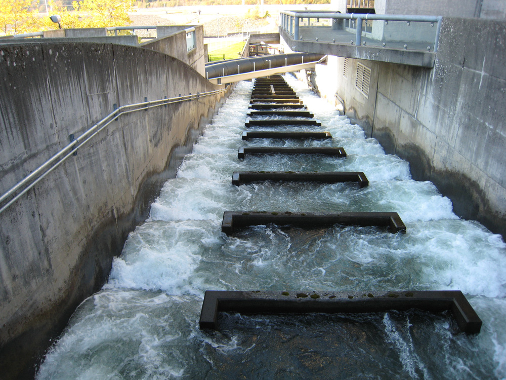 Hydropower appreciation day for Bonneville dam fish count